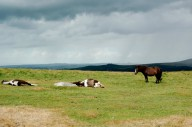 devon-dartmoor-attractions-3