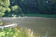 trout-fishing-lake-tavistock-devon-13