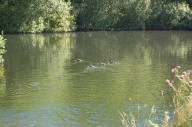 trout-fishing-lake-tavistock-devon-6