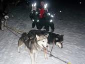 lapland-huskies2